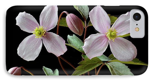 IPhone Case featuring the photograph Clematis Montana Rubens by Terence Davis