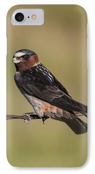 IPhone 7 Case featuring the photograph Cliff Swallow by Gary Lengyel