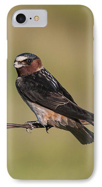 IPhone Case featuring the photograph Cliff Swallow by Gary Lengyel