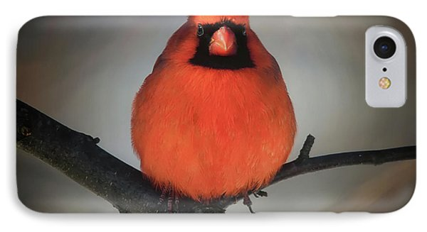 IPhone Case featuring the photograph Close Encounter On A Blustery Day by Lois Bryan
