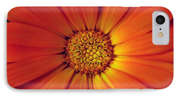 Close Up Of An Orange Daisy IPhone Case by Ralph A  Ledergerber-Photography