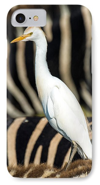 Close-up Of Cattle Egret Bubulcus Ibis IPhone Case by Panoramic Images