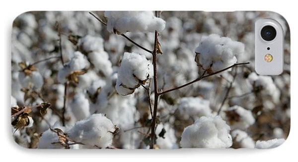 Close-up Of Cotton Plants In A Field IPhone Case by Panoramic Images