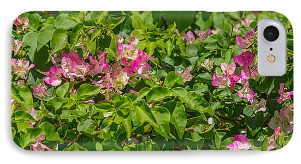 Close-up Of Flowers, Venice, Florida IPhone Case