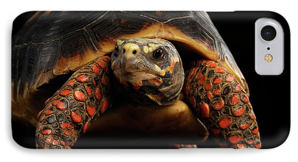 Close-up Of Red-footed Tortoises, Chelonoidis Carbonaria, Isolated Black Background IPhone Case by Sergey Taran