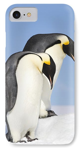 Close Up Of Two Adult Emperor Penguins IPhone Case by Daisy Gilardini