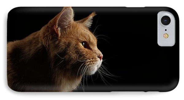 Cat iPhone 7 Case - Close-up Portrait Ginger Maine Coon Cat Isolated On Black Background by Sergey Taran