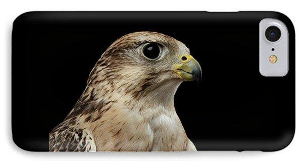 Close-up Saker Falcon, Falco Cherrug, Isolated On Black Background IPhone Case by Sergey Taran