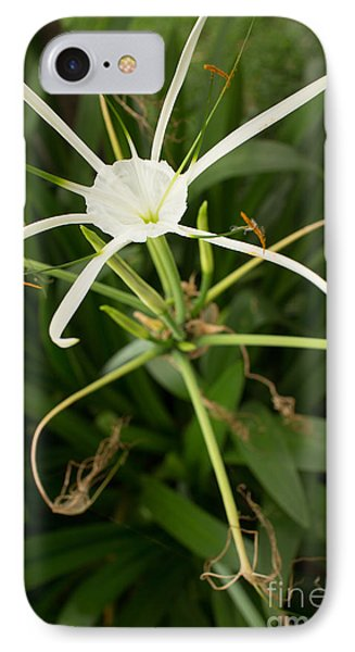 Close Up White Asian Flower With Leafy Background, Vertical View IPhone Case by Jason Rosette