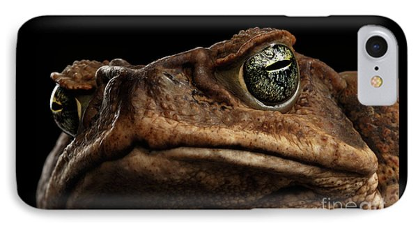 Closeup Cane Toad - Bufo Marinus, Giant Neotropical Or Marine Toad Isolated On Black Background IPhone 7 Case