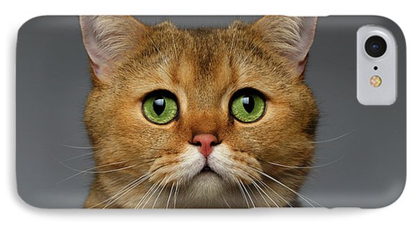 Closeup Golden British Cat With  Green Eyes On Gray IPhone 7 Case by Sergey Taran