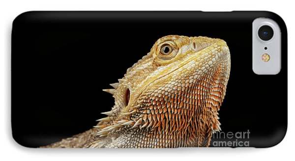 Closeup Head Of Bearded Dragon Llizard, Agama, Isolated Black Background IPhone Case by Sergey Taran