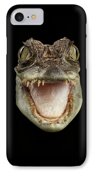 Closeup Head Of Young Cayman Crocodile , Reptile With Opened Mouth Isolated On Black Background, Fro IPhone 7 Case