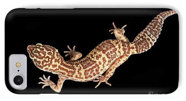 Closeup Leopard Gecko Eublepharis Macularius Isolated On Black Background IPhone 7 Case by Sergey Taran