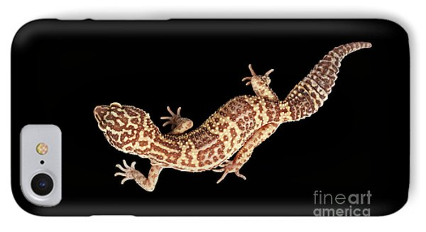 Closeup Leopard Gecko Eublepharis Macularius Isolated On Black Background IPhone Case by Sergey Taran