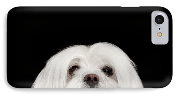 Closeup Nosey White Maltese Dog Looking In Camera Isolated On Black Background IPhone Case