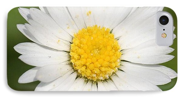 Closeup Of A Beautiful Yellow And White Daisy Flower IPhone Case by Tracey Harrington-Simpson