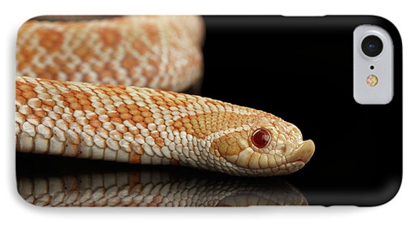 Closeup Pink Pastel Albino Western Hognose Snake, Heterodon Nasicus Isolated On Black Background IPhone Case by Sergey Taran
