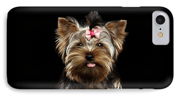 Closeup Portrait Of Yorkshire Terrier Dog On Black Background IPhone Case