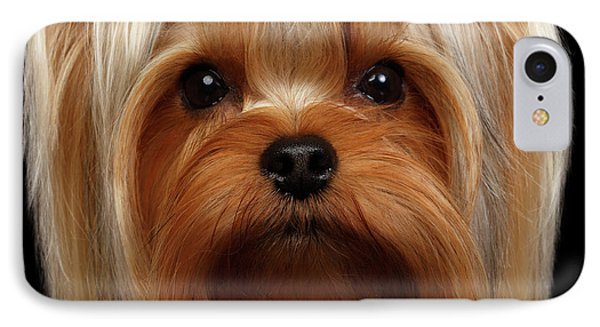 Closeup Portrait Yorkshire Terrier Dog On Black IPhone Case by Sergey Taran