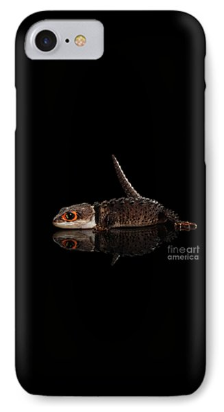 Closeup Red-eyed Crocodile Skink, Tribolonotus Gracilis, Isolated On Black Background IPhone 7 Case