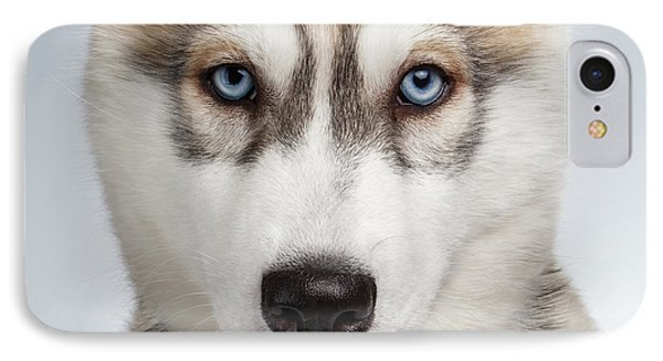 Closeup Siberian Husky Puppy With Blue Eyes On White  IPhone Case by Sergey Taran