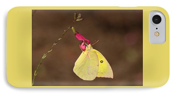 Clouded Sulphur Butterfly On Pink Wildflower IPhone Case by Sheila Brown