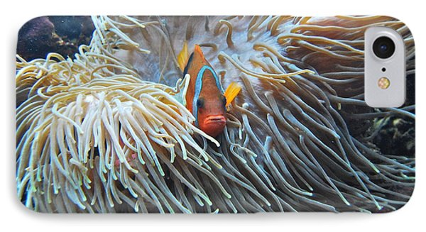 Clown Fish Phone Case by Michael Peychich