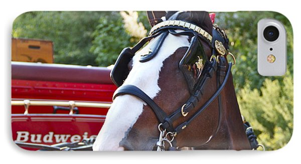 Clydesdale At Esp IPhone Case by Alice Gipson