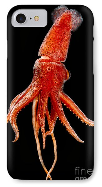 Cock-eyed Squid, Histoteuthis IPhone Case by Dant� Fenolio