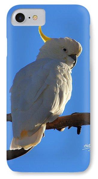 Cockatoo IPhone Case by Linda Hollis