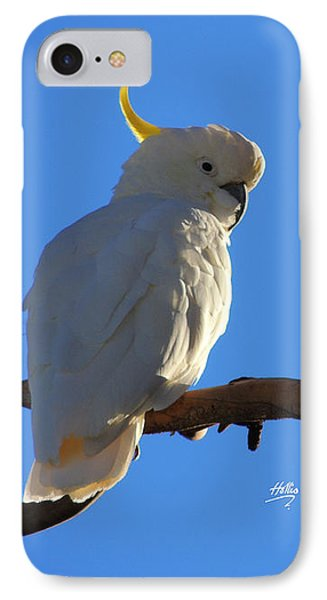 Cockatoo IPhone Case