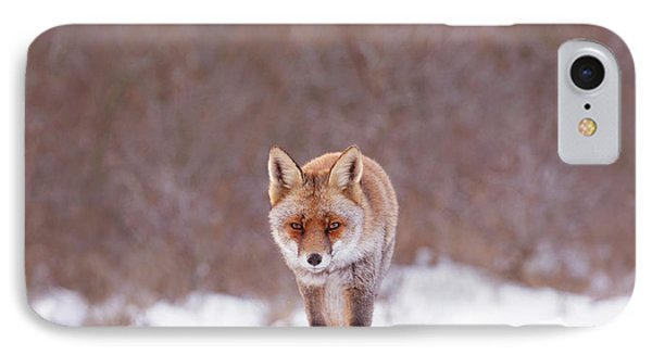 Cold Encounter - Red Fox In The Snow IPhone Case by Roeselien Raimond