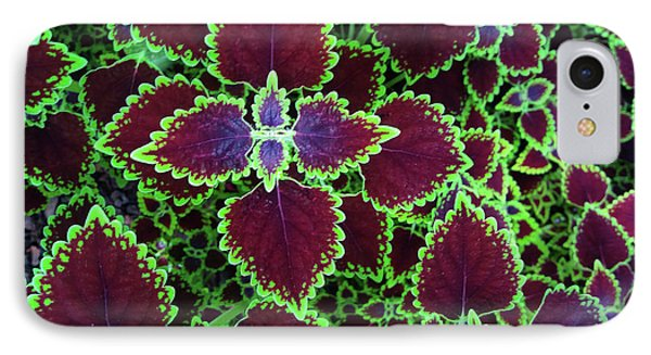 Coleus Leaves IPhone Case by Nareeta Martin