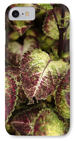 Coleus Plant Phone Case by Erin Paul Donovan