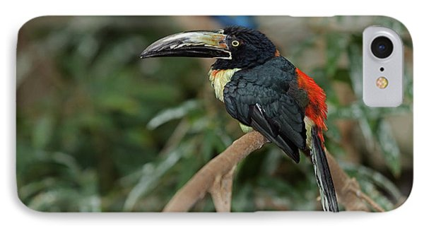 IPhone Case featuring the photograph Collared Aracari by JT Lewis