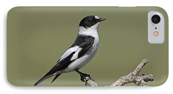 Collared Flycatcher IPhone Case by Richard Brooks/FLPA