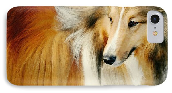 Collie Standard IPhone Case by Diana Angstadt
