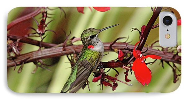 Color Coordinated Hummer IPhone Case by Debbie Oppermann