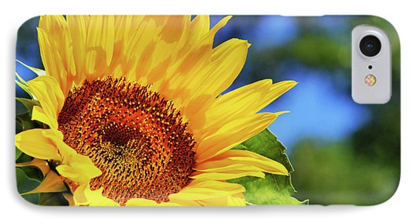 Color Me Happy Sunflower IPhone Case