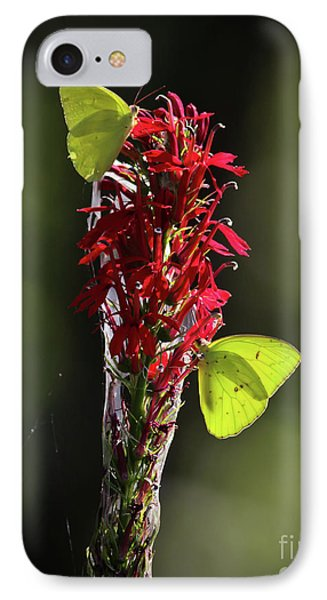 IPhone Case featuring the photograph Color On Citico by Douglas Stucky