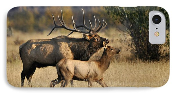 Colorado Elk  IPhone Case