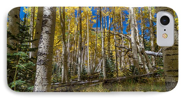 Colorado Fall Hike In The Aspens IPhone Case by Michael J Bauer