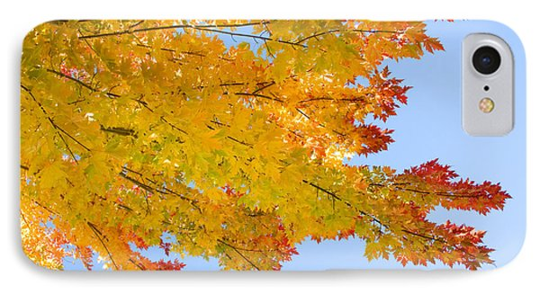 Colorful Autumn Reaching Out Phone Case by James BO  Insogna
