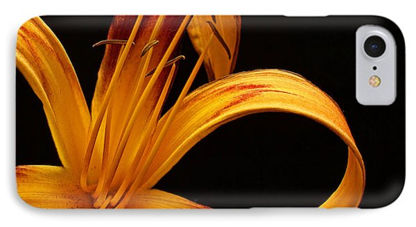 IPhone Case featuring the photograph Colorful Curls by Judy Vincent