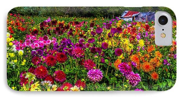 Colorful Dahlias In Garden IPhone Case by Garry Gay