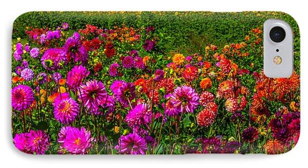 Colorful Dahlias Oregon IPhone Case