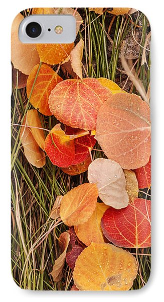 Colorful Fallen Aspen Leaves During Autumn IPhone Case by Vishwanath Bhat