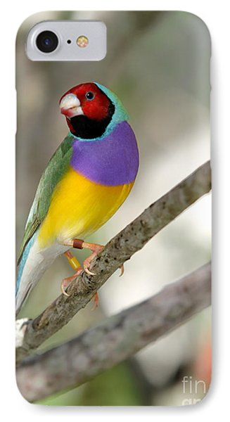 Colorful Gouldian Finch Phone Case by Sabrina L Ryan