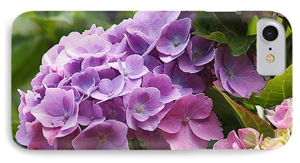 Colorful Hydrangea Blossoms IPhone Case by Rona Black